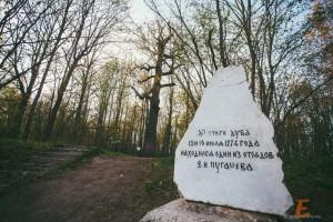 Дуб Пугачева - Марий - Эл